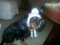 Lilly's new hat