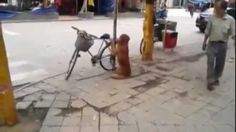 dog guards bike, then rides it