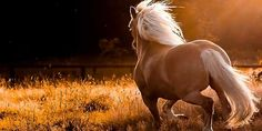 save the horses 92% of slaughtered horses are healthy and strong!!!