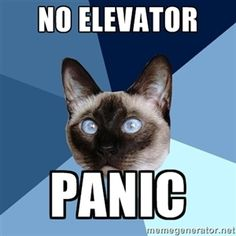No elevator?  Turn around and go home!!!  Chronic Illness Cat