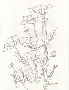 Line Drawing From Photo #3928 | Pics to Color