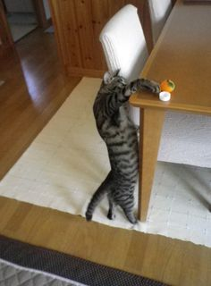 I'm just clearing the table...um, for dinner!  Yeah, for dinner!