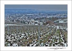 C'était hier la dernière soirée d'hiver en Champagne, sur les hauteurs d'Epernay. #epernay #marne #champagne #epernaytourisme #hiver #winter #photomicheljolyot #jolyot