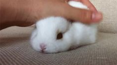Little pink bunny nose!