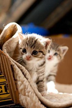 Two little sweeties