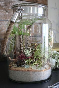 Indoor Terrarium Garden