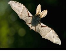 "i love bats. they are so cute. especially when they think they are tough. they are like, ""look at me! i'm so mean! rawr!"""