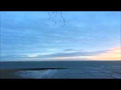 Ile de Ré, le 31 décembre 2012 à Foirouse avec les Bernaches Cravants | Charente-Maritime Tourisme #charentemaritime | #oiseau | #vidéo