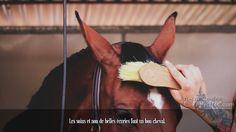 Les soins et non de belles écuries font un bon cheval.
