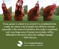 Farm sanctuary...I so want to visit this when I go to California!!