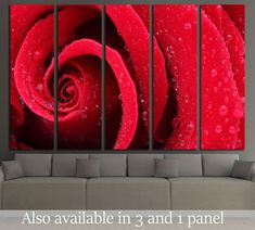 Macro Shot of a Red Rose №2551 Framed Canvas Print