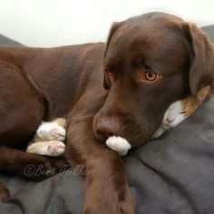 The Cutest Pets on Twitter This Week! | BED HEADS | Hessel the dog and Hannes the cat have an understanding: They'll cuddle like this as long as Hannes can still breathe.