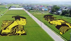 Rice Paddy Art Japan