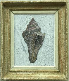 single shell Acrylic painting on wood in vintage frame by Peter Woodward