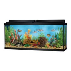 1000 ideas about 55 gallon aquarium on pinterest 55 for 55 gallon fish tank starter kit