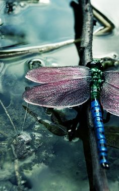 just stunning - the colors capture the feeling i get when i dee a dragonfly