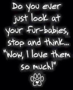 Loving our fur babies