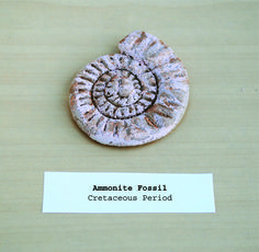 Let kids make their own ammonite fossil School Projects, Diy Projects, Educational Activities For Kids, Cool Things To Make, How To Make, Play Dough, Ammonite, Love Craft, Environmental Art