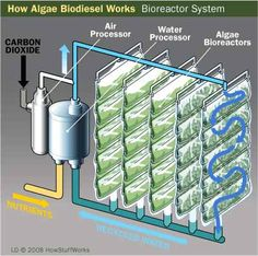 HowStuffWorks Growing Algae for Biodiesel Use With the global food crisis, some people feel that using food to make biofuel just doesn't make sense. Could algae be a solution? How could algae possibly fuel cars and even airplanes? Alternative Energie, Alternative Fuel, Renewable Energy, Solar Energy, Solar Power, Diy Solar, Off The Grid, Grand Popo, Technology