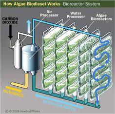 """HowStuffWorks """"Growing Algae for Biodiesel Use"""""""
