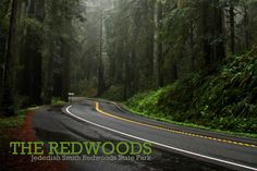 Jedediah Smith Redwoods State Park, California, Hwy 199 - This drive is a beauty. A leisurely drive as you driving through the trees like threading an eye of a needle. It's beautiful. - make things by Jen