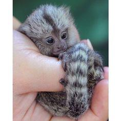 I won't think life is fair until I own a pet monkey.