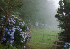 "quiet-nymph: """"Hortensien im Nebel - Hydrangea in the mist"" by Mindful Photography "" Des Fleurs Pour Algernon, All The Bright Places, The Ancient Magus Bride, Nature Aesthetic, Nymph, Photos, Pictures, Ethereal, Mother Nature"