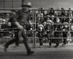 Horse Auction in Pennsylvania