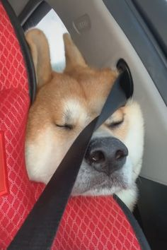 Daily Cute & Funny Videos,Gifs,Pictures of Cute & Funny Dogs,Cats and Other Animals. Cute Funny Dogs, Cute Funny Animals, Cute Baby Animals, Animals And Pets, Funny Animal Memes, Funny Animal Videos, Funny Animal Pictures, Shiba Inu, Cute Puppies