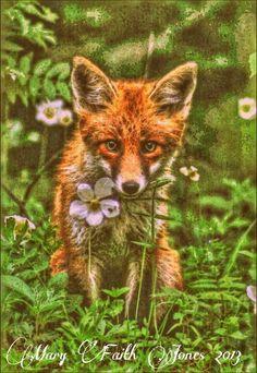 Fox art 2013/MFJ