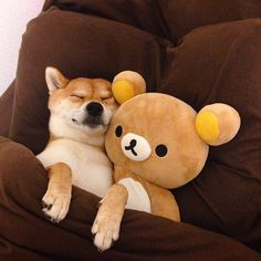 Rest well and sweet dreams holly shibe. Animals And Pets, Baby Animals, Funny Animals, Cute Animals, Shiba Inu, Cat Dog, Puppy Love, Cute Puppies, Cute Cats
