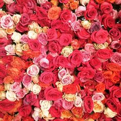 Beautiful selection of reds, oranges and pink.