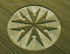 Chute Causeway nr Tidcombe, Wiltshire | 10th August 2013 | Wheat OH2