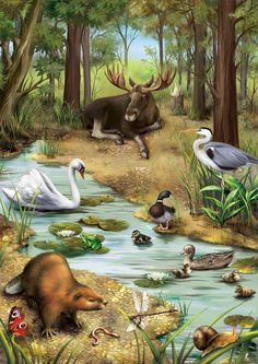"Ebook: ""Animals around the World"" on Behance Graffiti Kunst, Animals And Pets, Cute Animals, Illustration Mignonne, Le Zoo, Forest Illustration, Wild Nature, Forest Animals, Wildlife Art"
