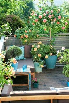 Balcony Plant Pots Online India Balcony Planting Pots Growing Roses In Containers Balcony Patio And Terrace For Knockout Roses Balcony Railing Garden Pots
