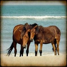 horses by GypsyHorse