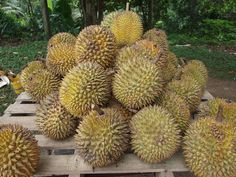 New blog post - Durian, worst or the best fruit ever?