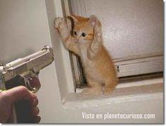 LAS MEJORES COSAS AL AMANECER: Fotos de gatitos