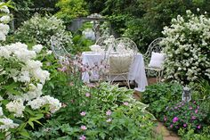tea in Carolyn's (of Prince Edward Island, Canada) garden - can you imagine!