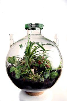 50 liter biodome