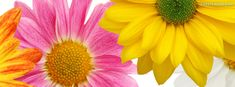 Pin <b>Spring</b> Cover Photos For Facebook Timeline Covers on Pinterest