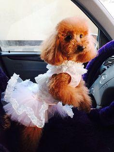 Personalizado hecho perro boda vestido de falda de tul y por LAmei