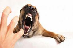 Han Aumentado Los Síntomas De Rabia De Animales Pero No Se Reportan Casos En Humano
