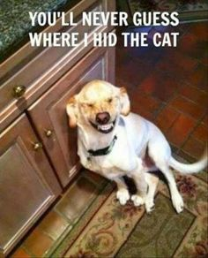 funny quotes and pictures 291 (52 pict) | Funny pictures