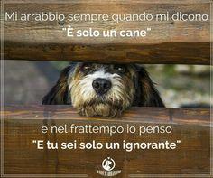 """I cani hanno il cuore e il cervello più sviluppato di alcuni """"esseri umani""""!!!"""