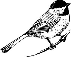 Malvorlage schmuck Kohlmeise Vogel Malvorlage