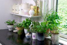 Plats i köket för krukor med örter  15 små detaljer som kommer få ditt kök att sticka ut - Sköna hem