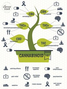 Cannabinoids 101 Cannabis EDUCATION Guide THC CBD CBB CBG MORE https://www.cbd-cannabis-oil.com/blogs/news