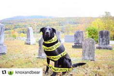 Bear is ready for Ghouls Gimlets & Grrrowlers! Who else is coming? Next Thursday at 6pm!    #Repost @knoxandbear (@get_repost)  What do you do if you see a zombie?! Hope it's Halloween!  We love this time of year and are so excited for extra treats parties and costume contests! We are most excited for @theurbanhound's Ghouls Gimlets and Growlers first annual halloween party on October 26th! From 6 PM - 8 PM UH Clients will enjoy a costume contest doggie playtime and food and drinks for the…