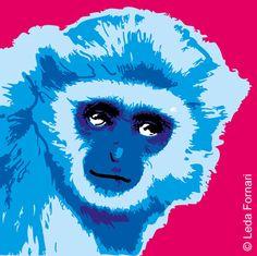 Blue Gibbon